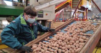 certificación exportación semillas de papas a Brasil_2