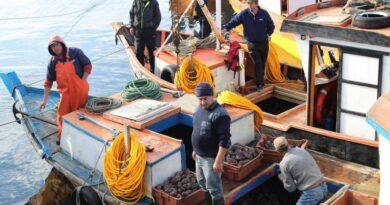 Se extiende plazo para que pescadores artesanales postulen a integrar el directorio de Fundación Chinquihue