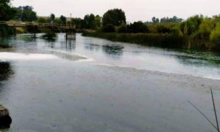 rio maullin contaminacion