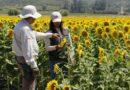 SAG anuncia la fusión de sus divisiones Agrícola y Forestal y Semillas para ofrecer procesos más rápidos y eficientes.