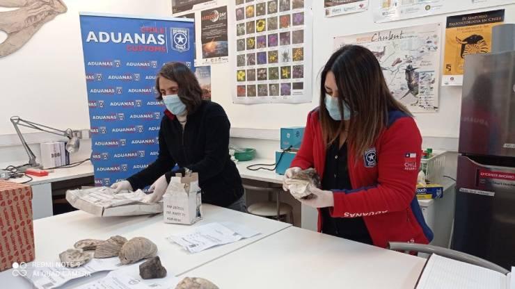 Entrega fosiles Aduana Osorno