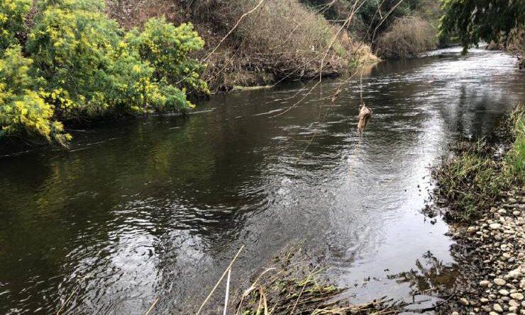 Municipio solicitará permiso a la dirección general de aguas para comenzar campaña de limpieza en Río Damas.